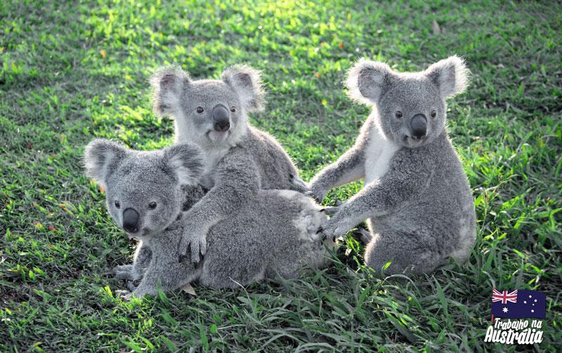 a melhor cidade da austrália para fazer intercâmbio - atrações de Brisbane