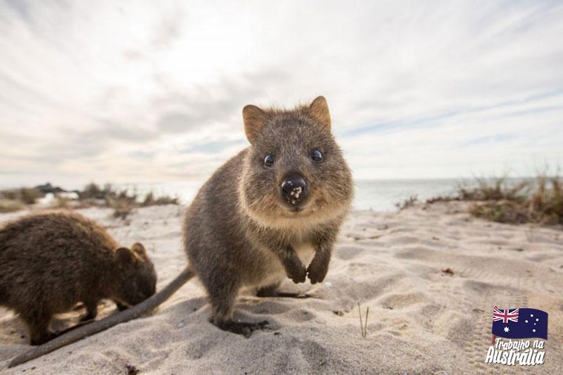 a melhor cidade da austrália para fazer intercâmbio - atrações de Perth