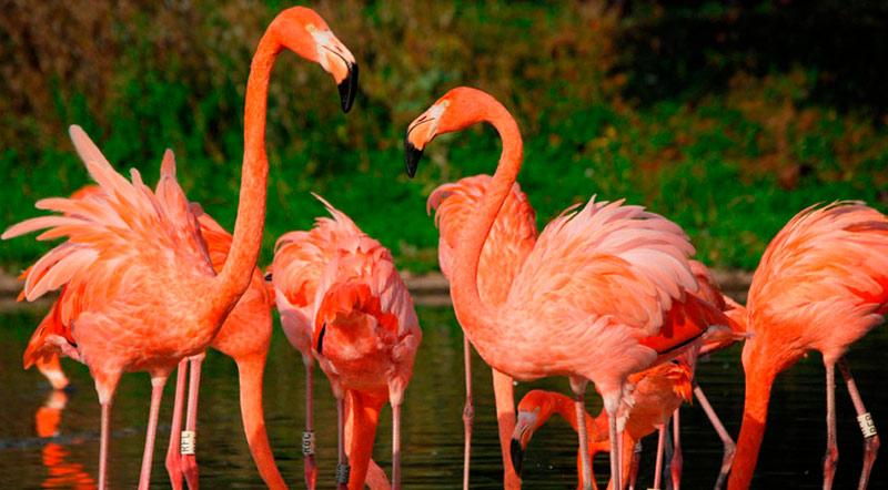 curiosidades sobre o reino unido - Slimbridge Wildlife & Wetlands Trust