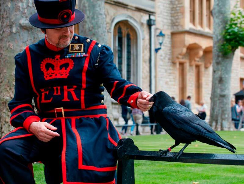curiosidades sobre o reino unido - corvos Torre de Londres